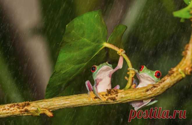 Животные имеют свои способы, как спрятаться от дождя         (16 фото) . Чёрт побери