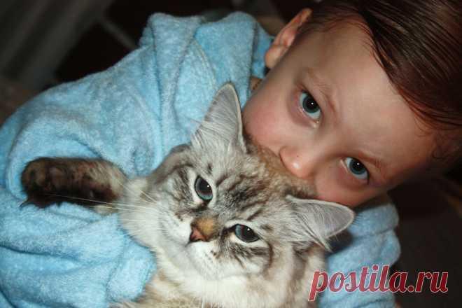 Невский маскарадный котик из питомника Формула Успеха, Айс