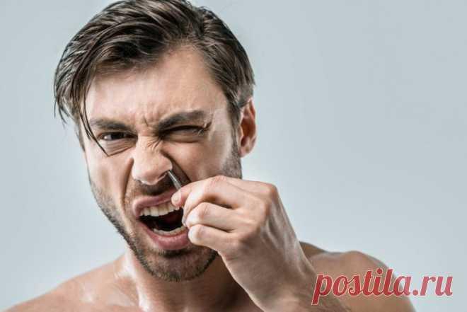 Почему не стоит удалять растительность в носу? - Образованная Сова