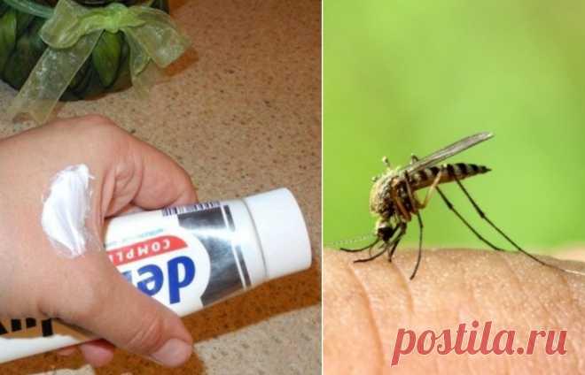 Как спастись от комаров без синтетических репеллентов: 7 средств, которые есть в каждом доме