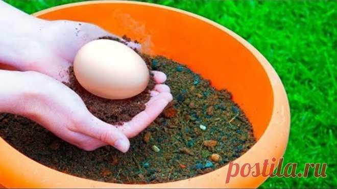 Закопайте Яйцо в Саду и Смотрите, Что Вырастет