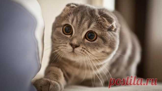 """Результат пошуку зображень за запитом """"коты милые"""""""