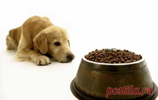 7 Motivos Para Não Deixar Comida à Vontade Para Seu Cão