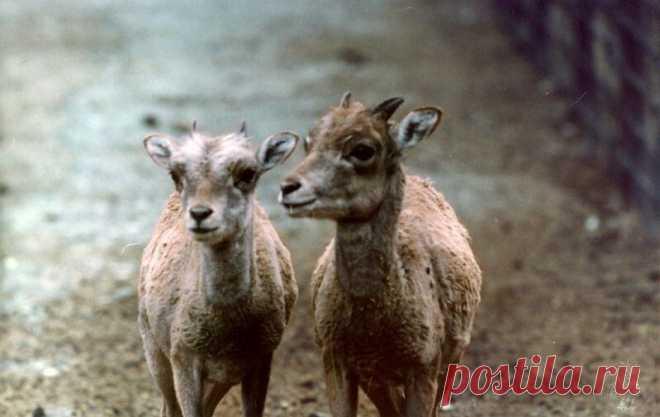 Очень забавные фото животных с эмоциями — найдите на них себя | WWF России | Яндекс Дзен