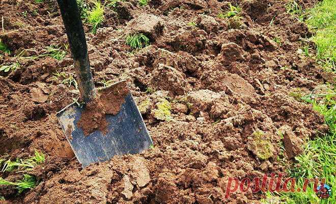 Рассказываю какой хитрый и супер-лёгкий приём вам нужно сделать с землёй, чтобы на 99% исчезли вредители | Дача на бате | Яндекс Дзен