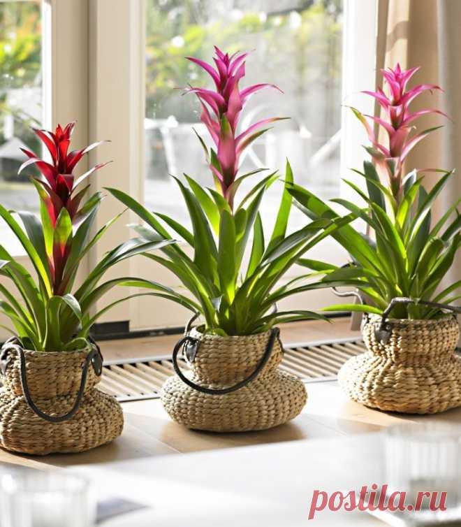 9 секретов для быстрого роста домашних растений — Полезные советы