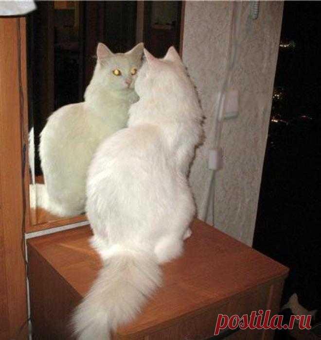 кошка смотрится в зеркало картинки