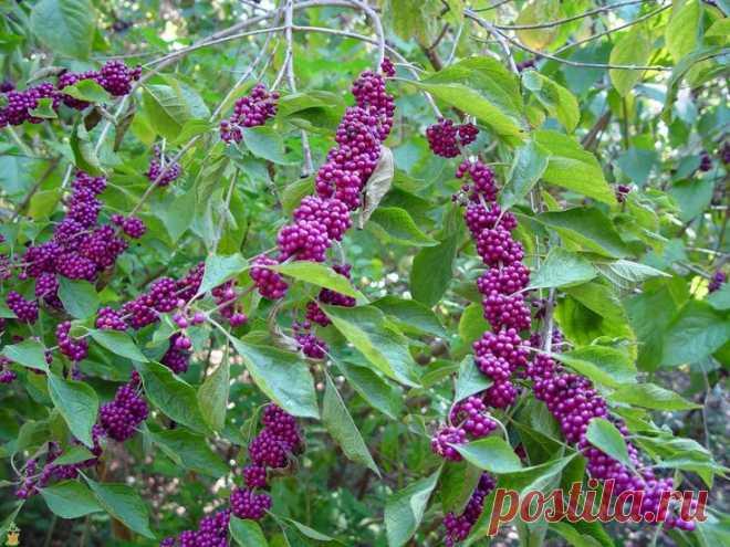 5 восхитительных растений вашего сада. Непременно посадите. — Мой Прекрасный Дом