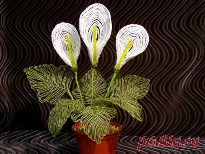 Каллы из бисера — Мастер-класс | Domigolki.ru Необходимые материалы и инструменты для создания калл из бисера. Пошаговый мастер-класс создания цветка. Схемы в помощь начинающим рукодельницам.