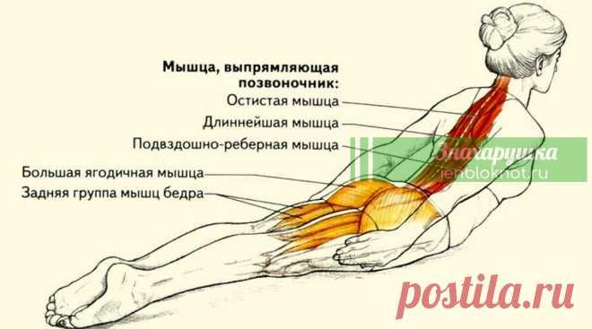 Тибетская утренняя гормональная гимнастика творит чудеса Эта система поддерживает все гормональные железы тела на уровне возраста 25-30 лет. Благодаря этому у практикующих гормональную гимнастику уходят хронические заболевания, нормализуется энергетика тела, замедляется старение организма, продолжительность жизни увеличивается на 20-30 лет.