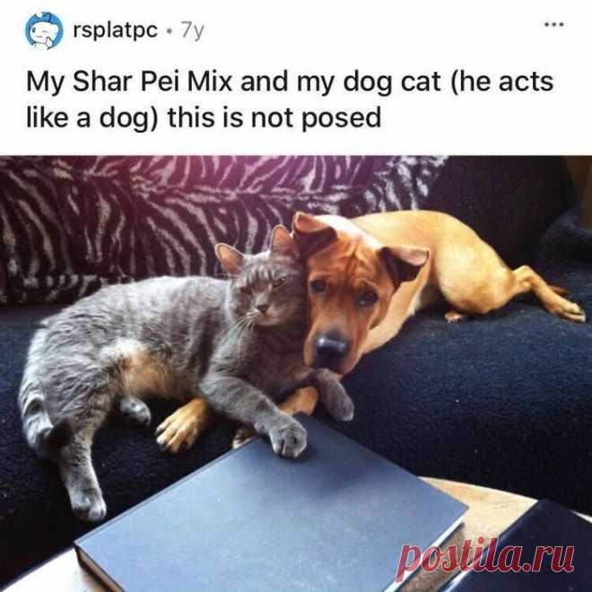 20 кошек и собак, у которых, возможно, есть неразрывная связь друг с другом