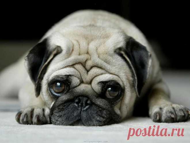 Совместимость домашнего животного с характером человека, в зависимости от знака зодиака