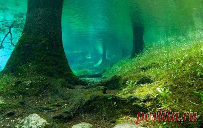 Необычное зеленое озеро | Неопознанное