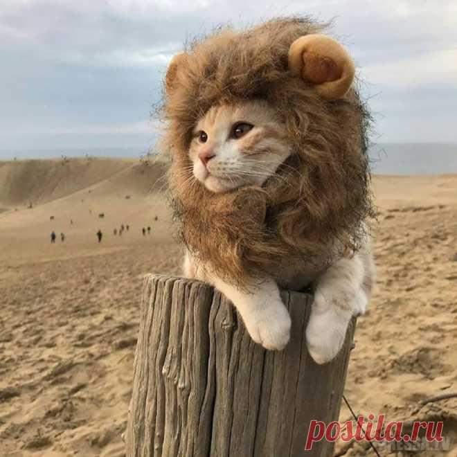Картинки про львенка смешные