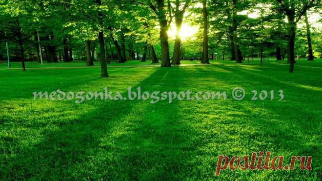 Green-Nature-Beautiful
