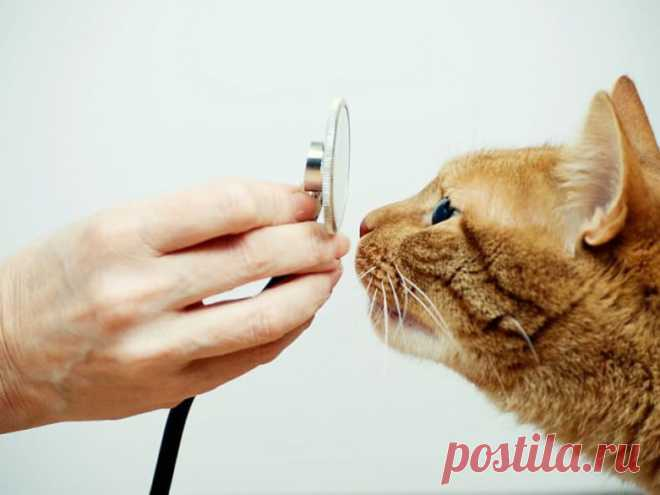 Аптечка первой помощи для домашних животных