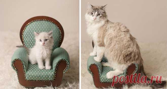 15 невзрачных котят, которые выросли в невероятных красавцев, пусть и немного наглых