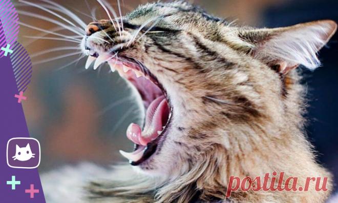 🐱Секреты кошачьих зубов, о которых должен знать владелец | Нос, хвост, лапы | Яндекс Дзен