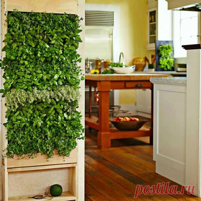 Замечательные способы озеленения квартиры