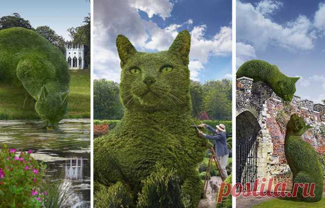 Коты в английских парках: Почему огромные стриженные кусты вызвали настоящий ажиотаж в Интернете . Чёрт побери
