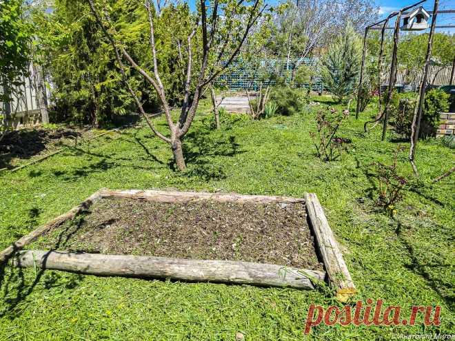 Огурцы, редиска, кабачки и зелень - вот и весь наш крымский огород. Да, еще помидоры будут, но их мы пока не посадили | Дневник отчаянных пенсионеров | Яндекс Дзен
