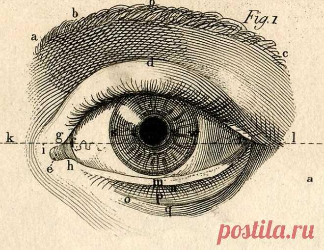 Почему мы не любим смотреть в глаза Люди не любят смотреть глаза в глаза. Почему же мы отводим взгляд? Как часто мы это делаем? Смотрят ли в глаза лжецы? У современной науки есть свои ответы на эти и другие вопросы.