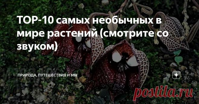 TOP-10 самых необычных в мире растений (смотрите со звуком)