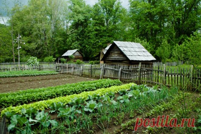 Меньше места – больше урожай: правила обустройства экономичного огорода