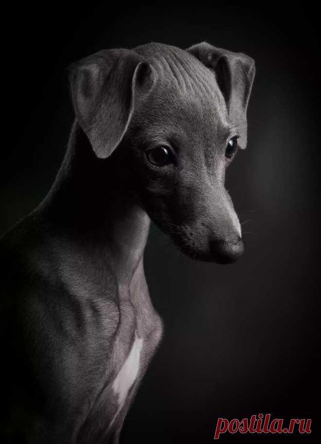 Ретроспектива: 30 фотографий от призеров конкурса «Dog photographer of the year 2018»   Кинолог Александр Смирнов   Яндекс Дзен