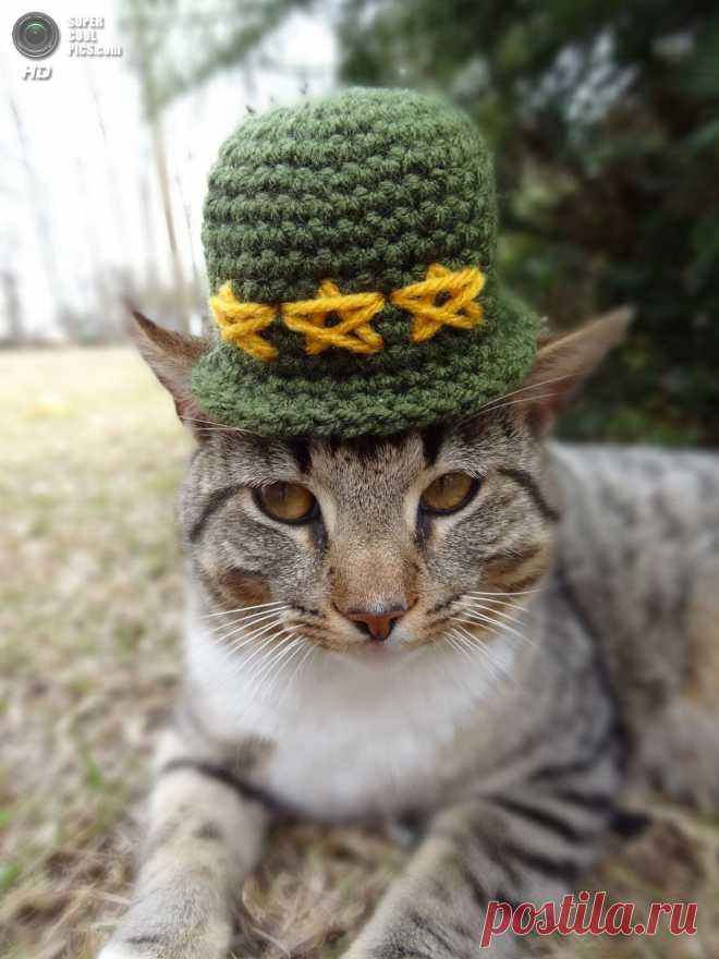 Головные уборы для котов.