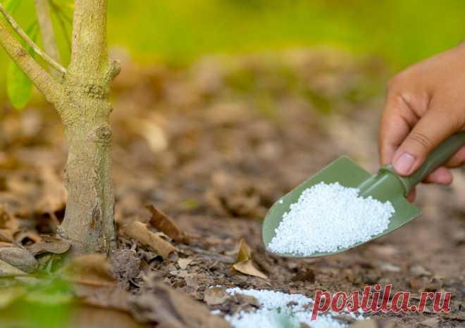 Как правильно подкармливать растения мочевиной | О Фазенде. Загородная жизнь | Яндекс Дзен