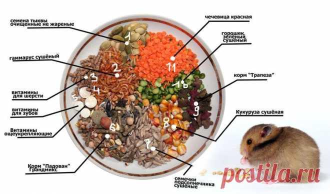 Чем кормить хомяка, чтобы он был здоров и весел? | Грызунчик