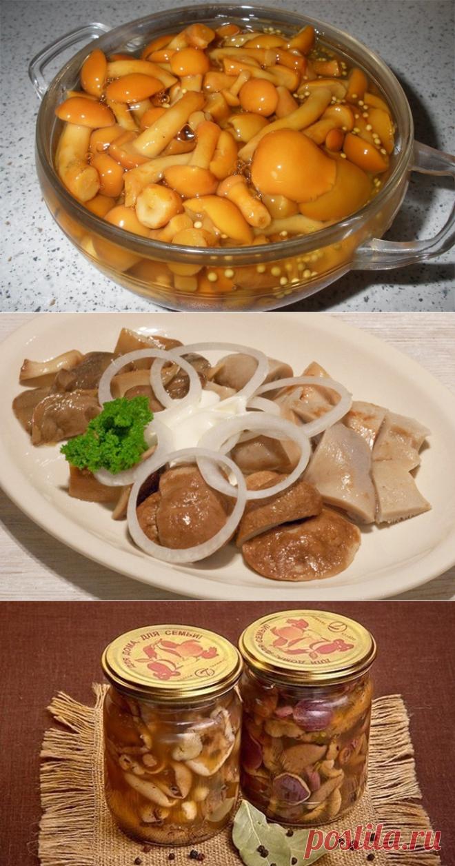 дождемся, грибы на зиму рецепты приготовления с фото фотосессии