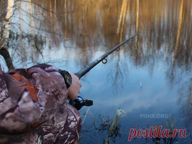 При желании и в лесу можно рыбы наловить