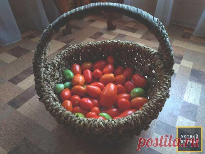 Как правильно оставлять на дозревание помидоры | Уютный Журнал | Яндекс Дзен