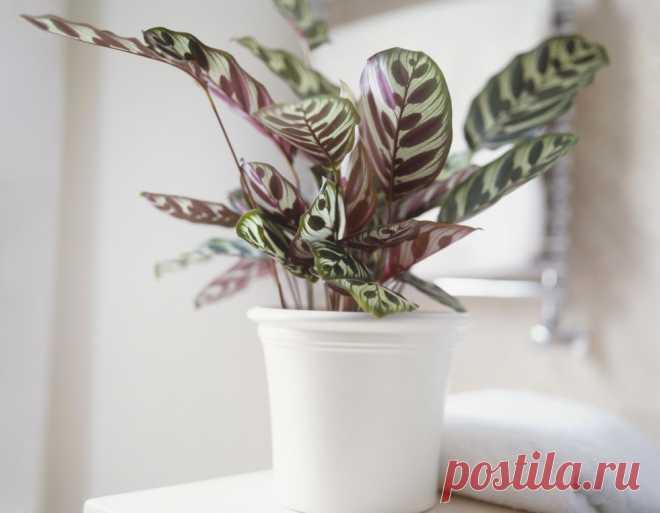 10 удивительных комнатных растений, которые обожают темноту! — Мой милый дом