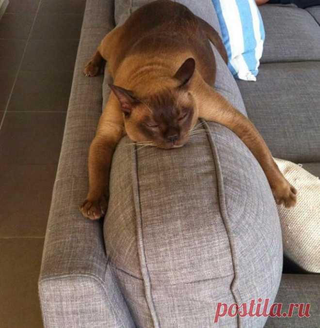Как правильно лежать на диване
