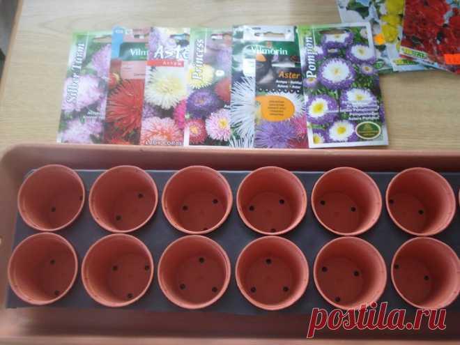 Уважаемые цветоводы! Поддалась красоте и обаянию ваших цветов и решилась тоже приукрасить наш небольшои дворик. Прошу помощи в некоторых вопросах по выращиванию рассады.