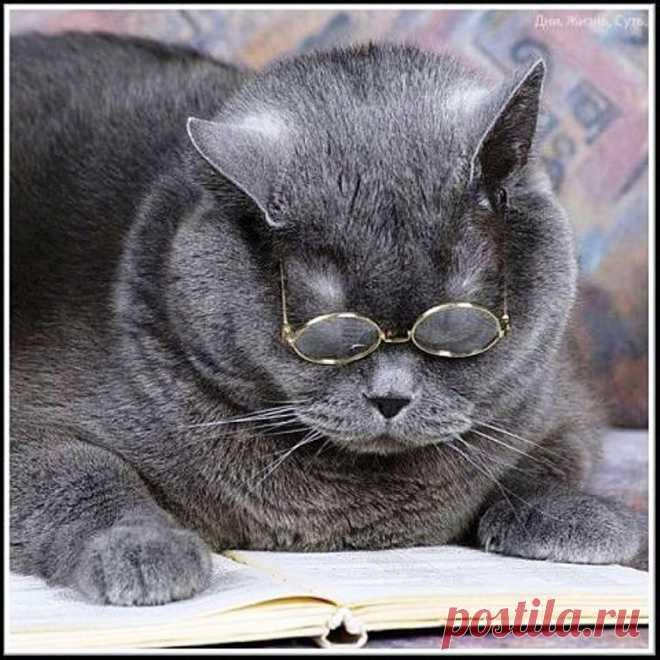 Картинки коты приколы читать