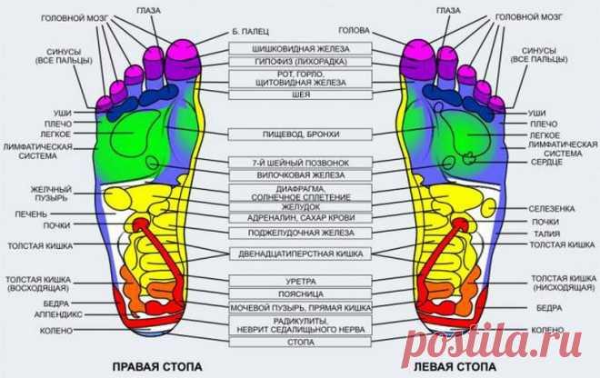 Внутренние органы на теле человека. Акупунктурные точки. – ~~ЗДОРОВЬЯ ВАМ!, пользователь Рыбка Золотая | Группы Мой Мир
