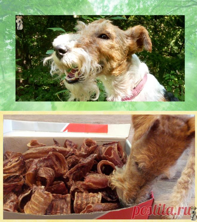 С помощью сушилки, потратив небольшое количество времени вы сможете сделать отличные вкусняшки для своей собаки
