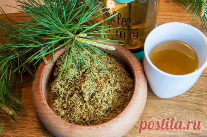 Узнала, что в соседней деревне делают ферментированный чай из сосновой хвои. Попробовала и попросила рецепт | Дом с Котом | Яндекс Дзен
