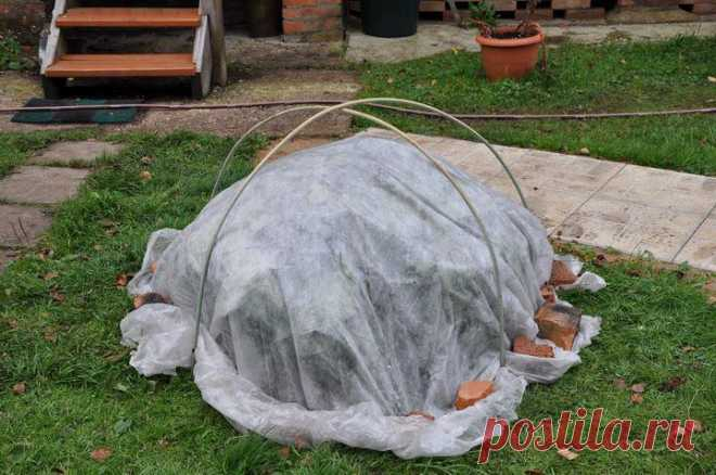 Гортензия осенью: подкормка, уход, какие вносить удобрения, подготовка к зиме, полив, обрезка, видео, фото
