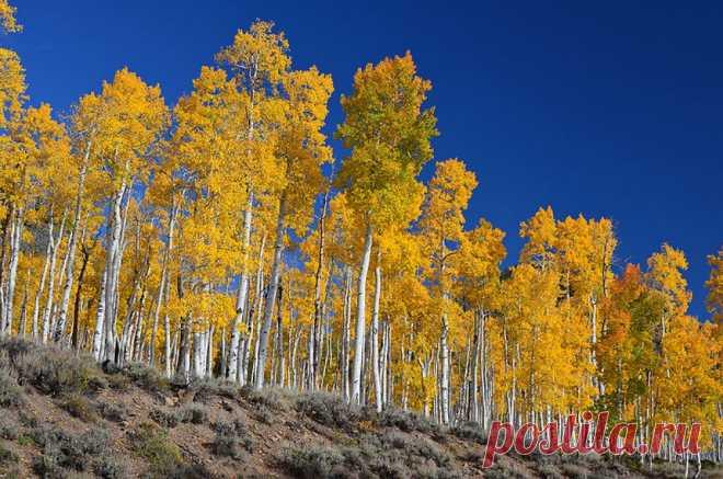 Сколько здесь деревьев?