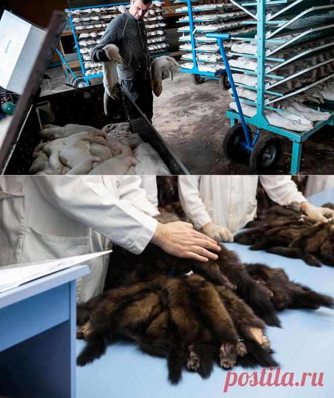 Vitória! - Maior empresa de vendas de peles anuncia seu fechamento - Animalist News - Medium
