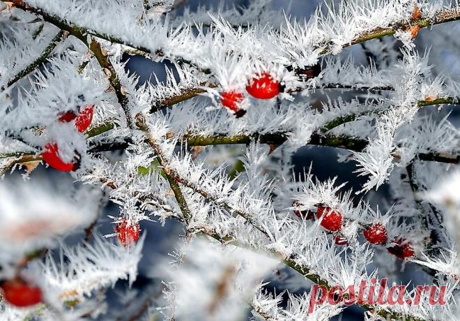 «Льдинки, ветер и мороз» — подвижная детская игра | Игры с детьми от года до семи | Яндекс Дзен