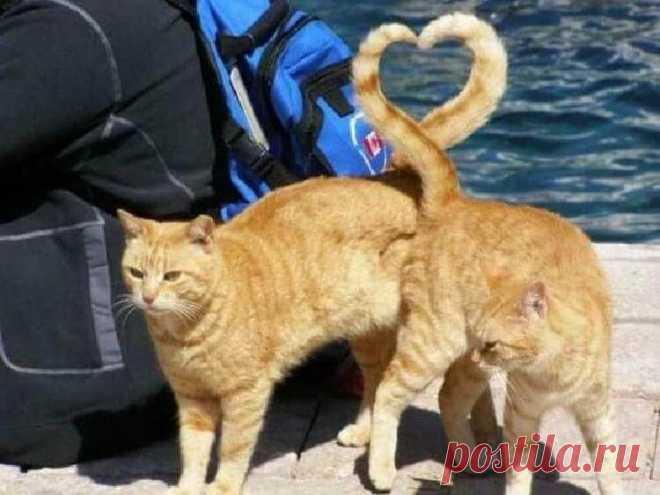 25 фото котов, сделанных в единственно верный момент — Все для души