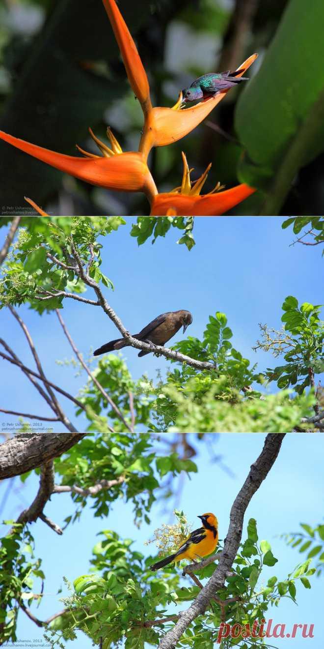 >> Животный мир Коста-Рики. Часть 2 | ФОТО НОВОСТИ