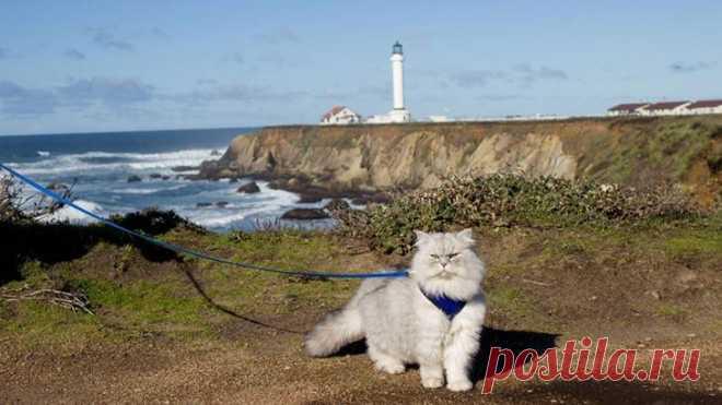 Gendalf — el gato-viajero del refugio, cuyas vacaciones mucho más abruptamente de tuyos
