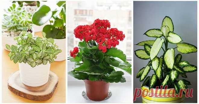 ТОП-15 самых живучих и неприхотливых растений для вашего дома Для жизни растениям нужен самый минимум— почва, вода и солнце. Но даже если вы надолго оставите какое-то из этих 15 растений в тени или забудете вовремя его полить, оно не станет вам «мстить», как эт…